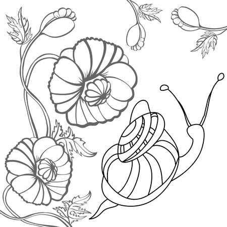 cochlea: Snail and poppy. Black-and-white illustration. Illustration