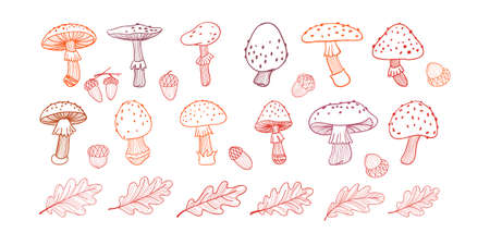 Set of poisonous mushroom, fly agarics,oak leaves and acorns. Doodle illustration. Line drawing
