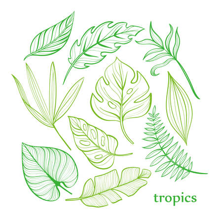 Set of tropical leaves. Line drawing. Hand-drawn illustration