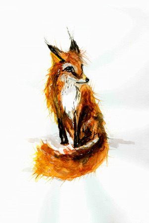 careless: Careless watercolor drawing of red fox on a white background. Stock Photo