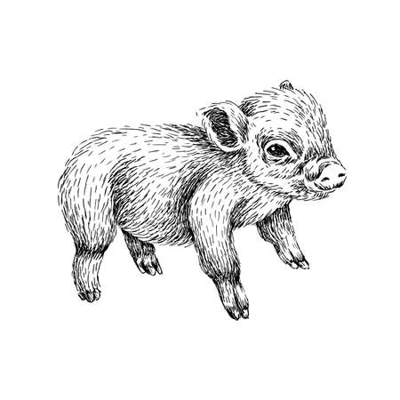 Baby farm animal. Domestic Little Pig. Hand drawn sketch line art image in black and white.