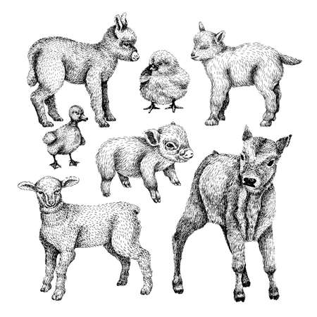 Farm baby animals set. Hand draw line art style illustration. Sketch of cute calf, duck, lamb, goat, chicken, pig, donkey. BLack and white vector image. Ilustração