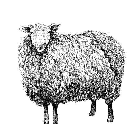Schafe skizzieren Stil. Hand gezeichnete Illustration des schönen Schwarzweiss-Tieres. Strichzeichnung im Vintage-Stil. Realistisches Bild. Vektorgrafik
