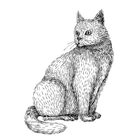 Cat art drawing high quality vector illustration. Hand drawn of cat. Line art sketch style of sitting white cat. Black and white image. Stock Illustratie