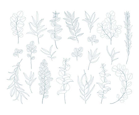 Line art eucalyptus branches and leaves set. Exotic floral illustration isolated on white background. Hand drawn floral clipart. Botanical drawings. Elegant set of floral elements. Çizim