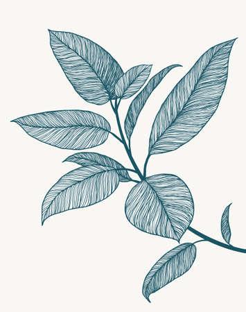Ficus line art illustration. Minimalist botanical poster. Tropical plant branch. Hand drawn floral background. Abstract design artwork. Line floral drawing. Blue marine summer fresh colors.