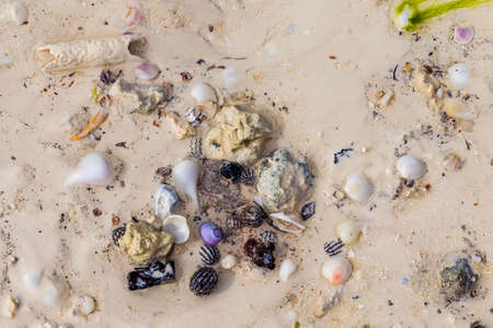 Colorful wet  broken and whole seashells and small stones on the wet sand of an ocean beach after a storm