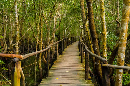 wooden bridge in the mangrove forest stretching away in sunny sumer day in jungle