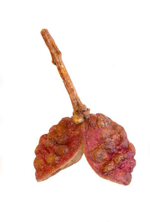 super macro shot one beautiful dark pink berry sichuan pepper isolated on white background very close