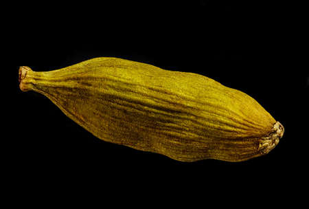 macro shot of one pod of cardamom green isolated on a black background very close in detail Zdjęcie Seryjne