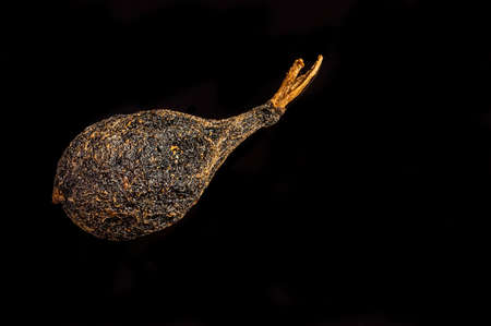 macro shot of one pea bourbon pepper with a tail from madagascar isolated on black background. Voatsiperifery pepper Фото со стока