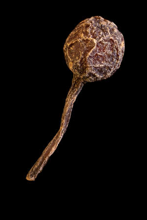 super macro shot of one pea bourbon pepper with a tail from madagascar isolated on black food background. Voatsiperifery pepper