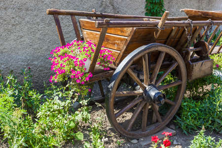 Flowers in a flowerbed on a clear day a cart on the street
