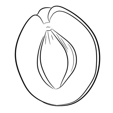 half of apricot contour on white background of vector illustrations