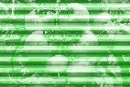 Image collage of tomatoes on a branch from horizontal lines and paths of variable thickness color green on white background. Vector illustration.