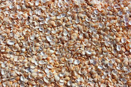 Shells on the resort beach in bulk for background