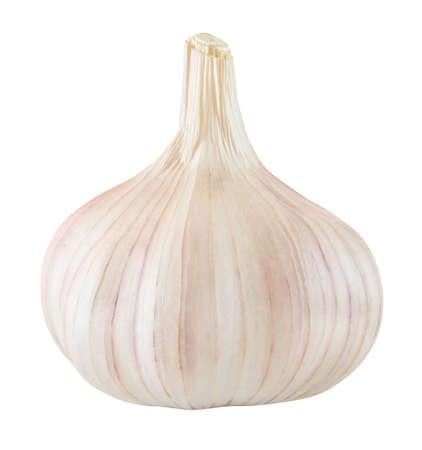 Garlic one whole isolated on white background.