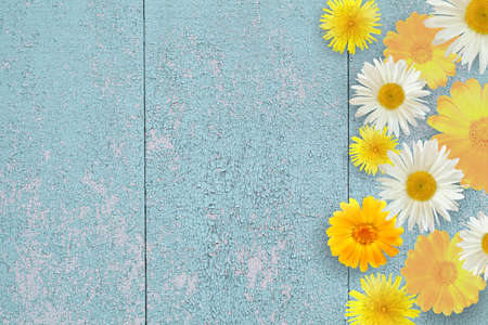 Garden flowers white and yellow over a blue wooden table background. Background with space for copying.