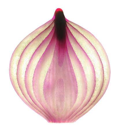 Red onion slice of the middle part to the lumen in the contour light