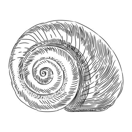 Spiral shell sketch from the contour black brush lines different thickness on white background. Vector illustration.