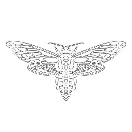 Butterfly hawk moth death head, acherontia atropos from black contour curves lines on white background. Vector illustration.