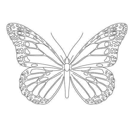 Butterfly with wings, insect, from black contour curves lines on white background. Vector illustration.