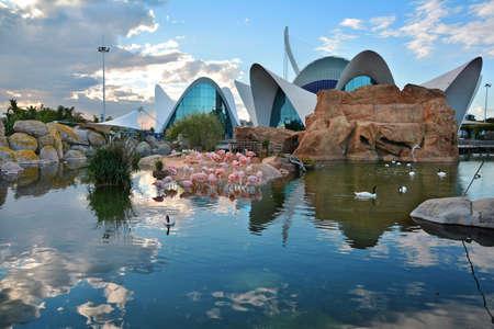oceanographic: VALENCIA, SPAIN - NOVEMBER 11, 2016. Flamingo pool at Oceanographic center , Valencia , Spain. Editorial