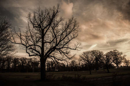 Scary Spooky bare tree background