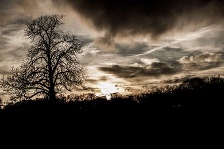 Scary Spooky bare tree background photo