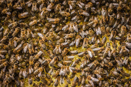 Yellow Beautiful Honeycomb with Honey and bees Background Foto de archivo