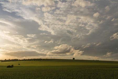 filed: Green Wheat filed Blue sky and sun glare