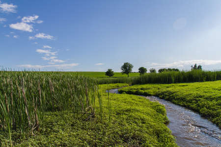 Spring and Summer New Beginnings Nature Themed  Stock Video Footage. Please check all Seasons' Collections on our profile.