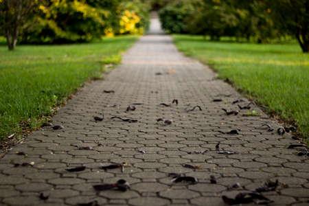 Path to Success Concept Background Nature Park