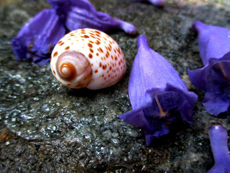 seaa: shells and flowers