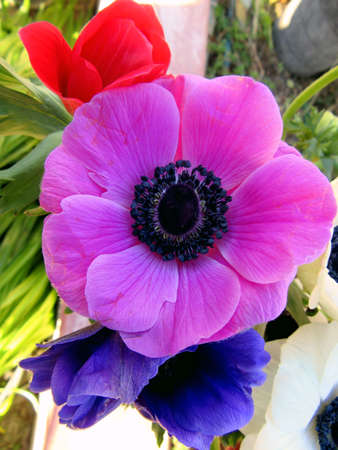 detail of anemone flowers