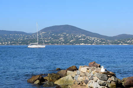 saint tropez: Sea, rocks, seagulls and sailing boats in Saint Tropez Stock Photo