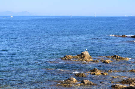 saint tropez: Sea, rocks and seagulls in Saint Tropez