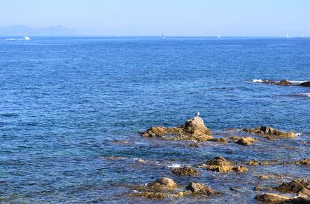 tropez: Sea, rocks and seagulls in Saint Tropez