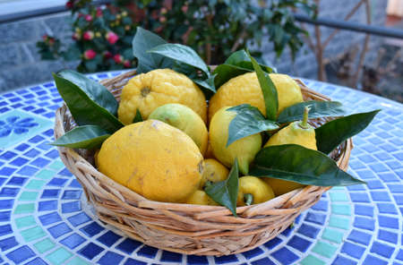 citrons: basket with lemons and citrons