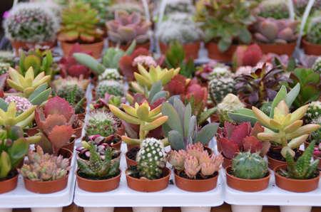 many succulents pots