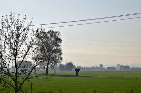 the po valley: Po Valley in the morning in Italy