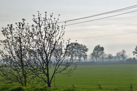 Po Valley in the morning in Italy