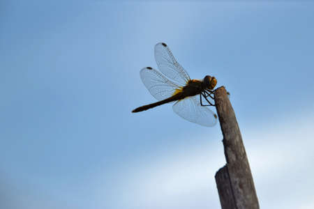 exemplary of dragonfly