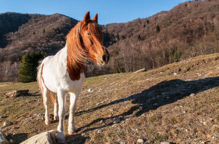 Horse in the meadow mountain photo