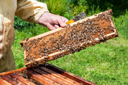 worker bees: Worker bees in the hive