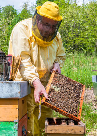 beekeeper: Beekeeper checking a beehive Stock Photo