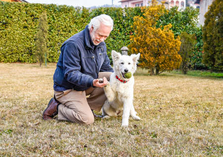 graying: Man playing with White Swiss Shepherd puppy in the park. Stock Photo