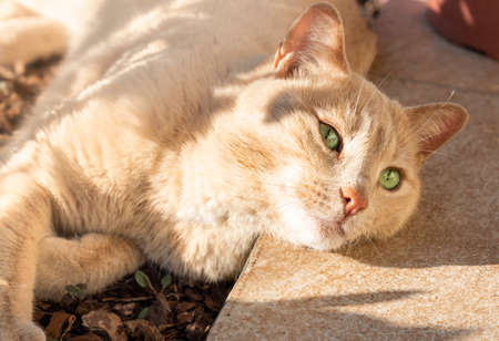 Red Cat with green eyes lying on the ground - soft focus Imagens
