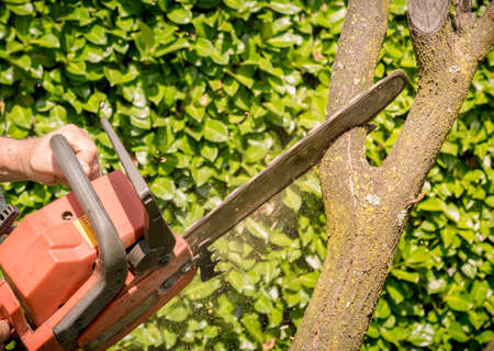 Closeup of woodcutter sawing chainsaw in motion, concept is to bring down trees. Reklamní fotografie