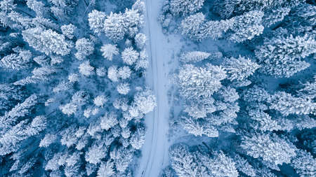 Aerial view of snow covered trees by forest in mountains. Reklamní fotografie